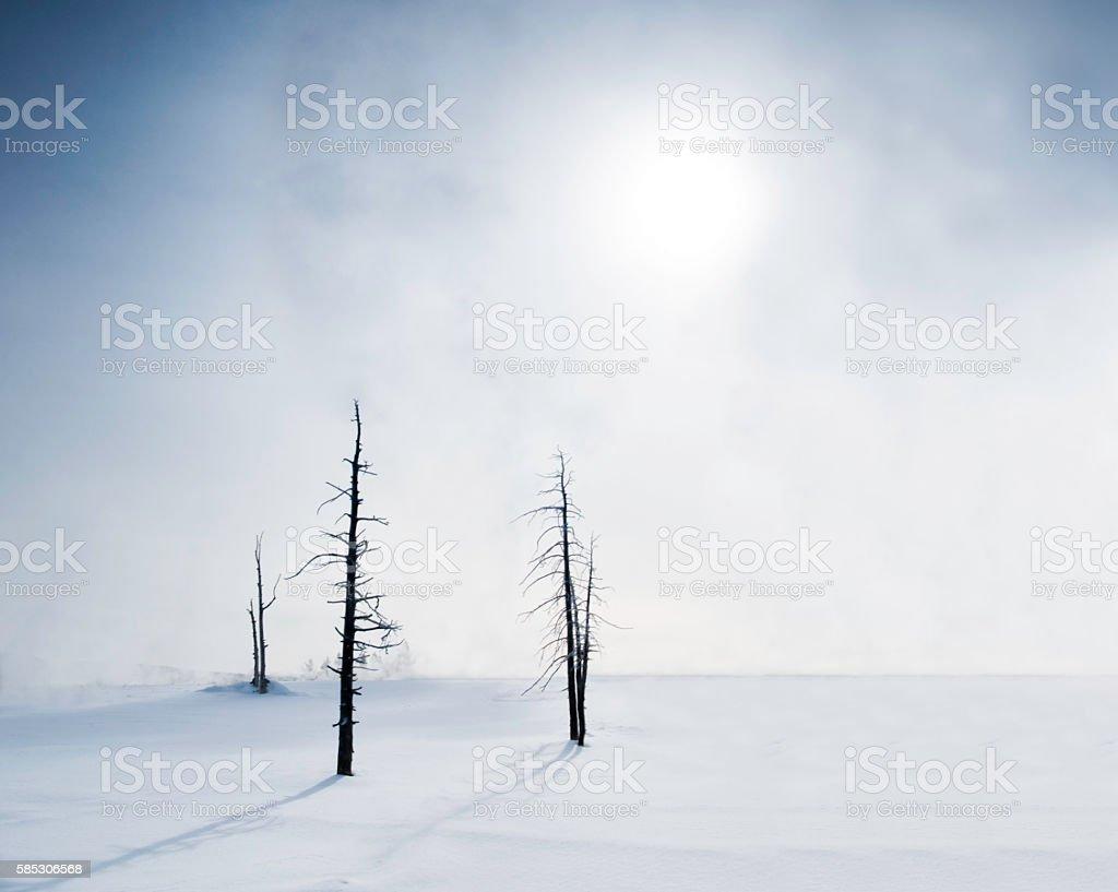Winter beauty in bleakness stock photo