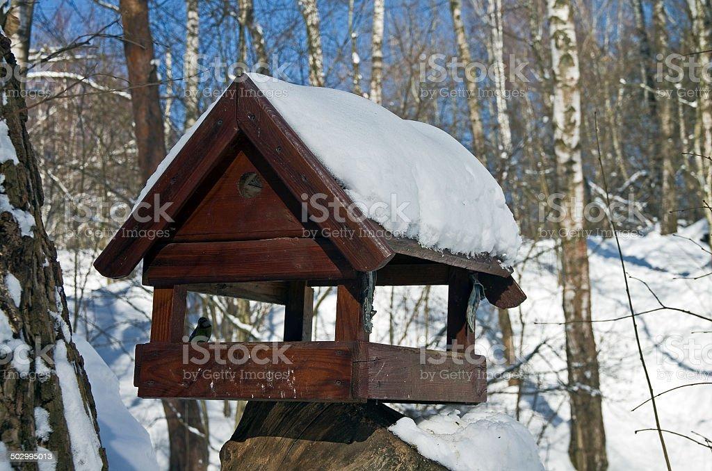 Winter Bird Feeder. royalty-free stock photo