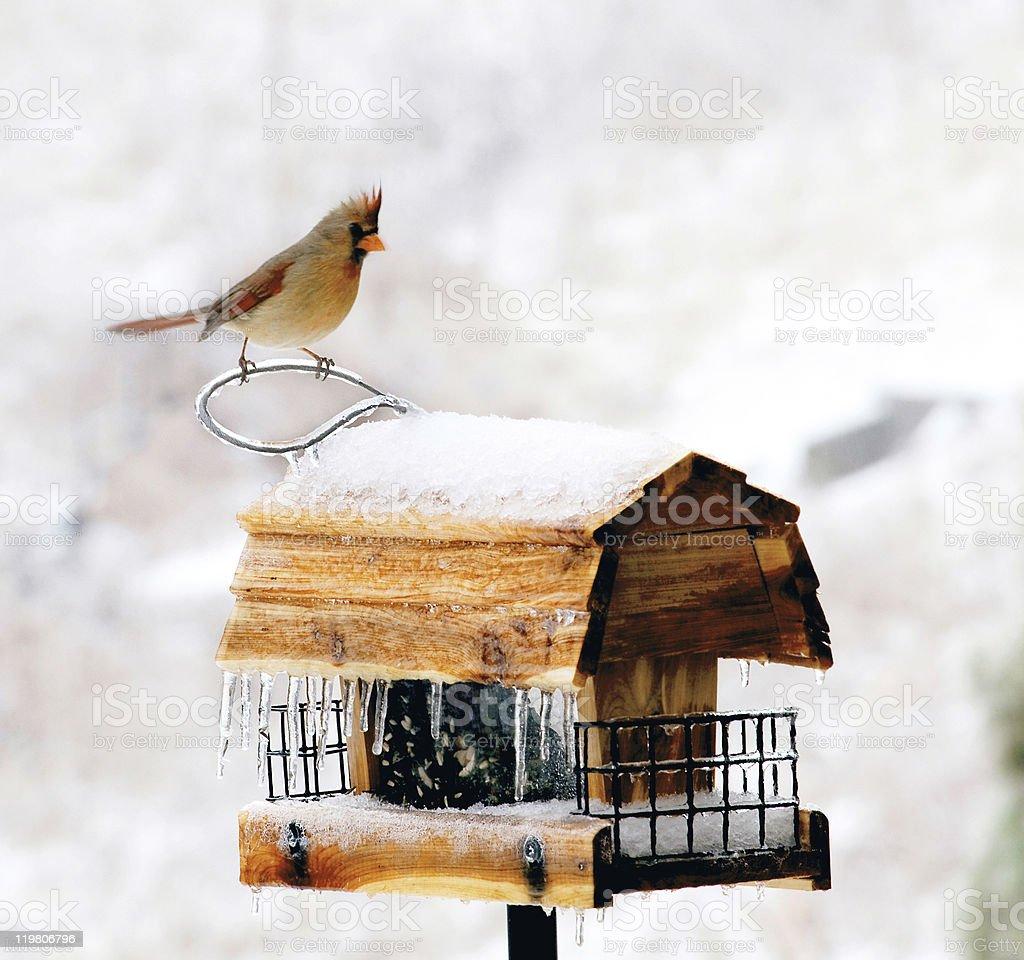 Hiver Mangeoire à oiseaux avec icicles et femme Cardinal photo libre de droits