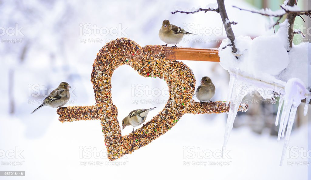 winter birds and love the concept stock photo