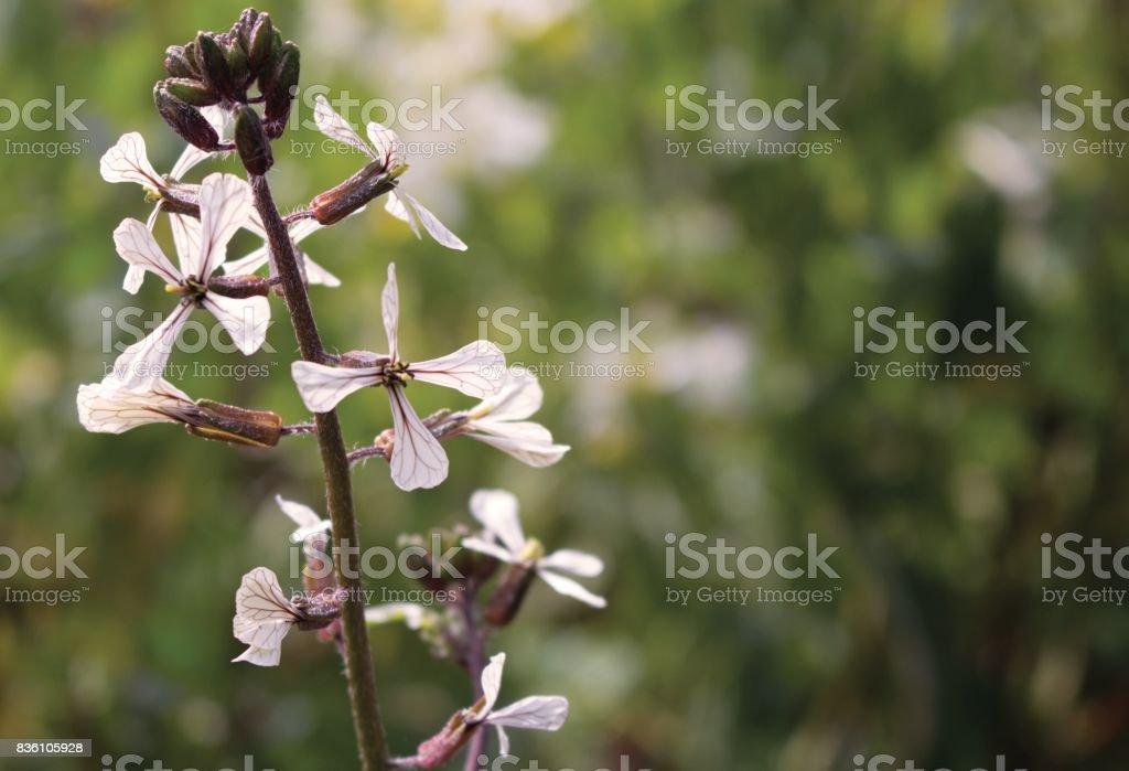 Winter Blossom stock photo