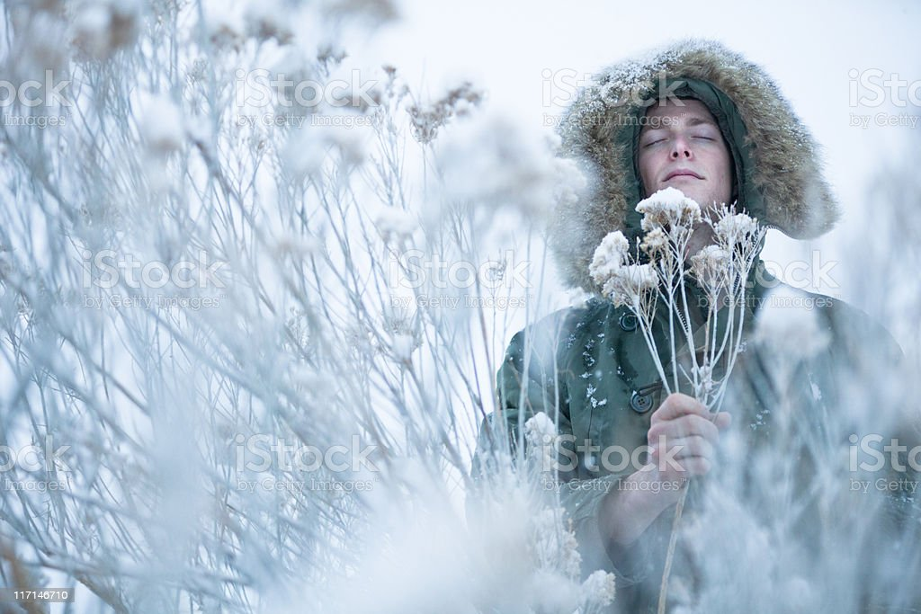 Winter Bouquet of dried flowers royalty-free stock photo