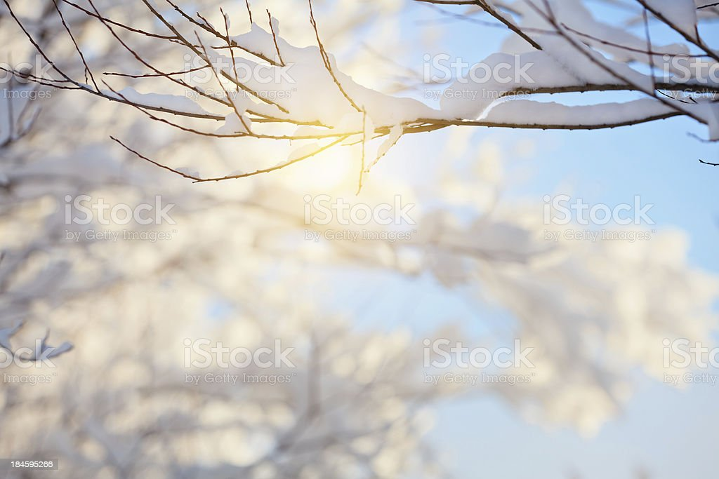 Winter branch royalty-free stock photo