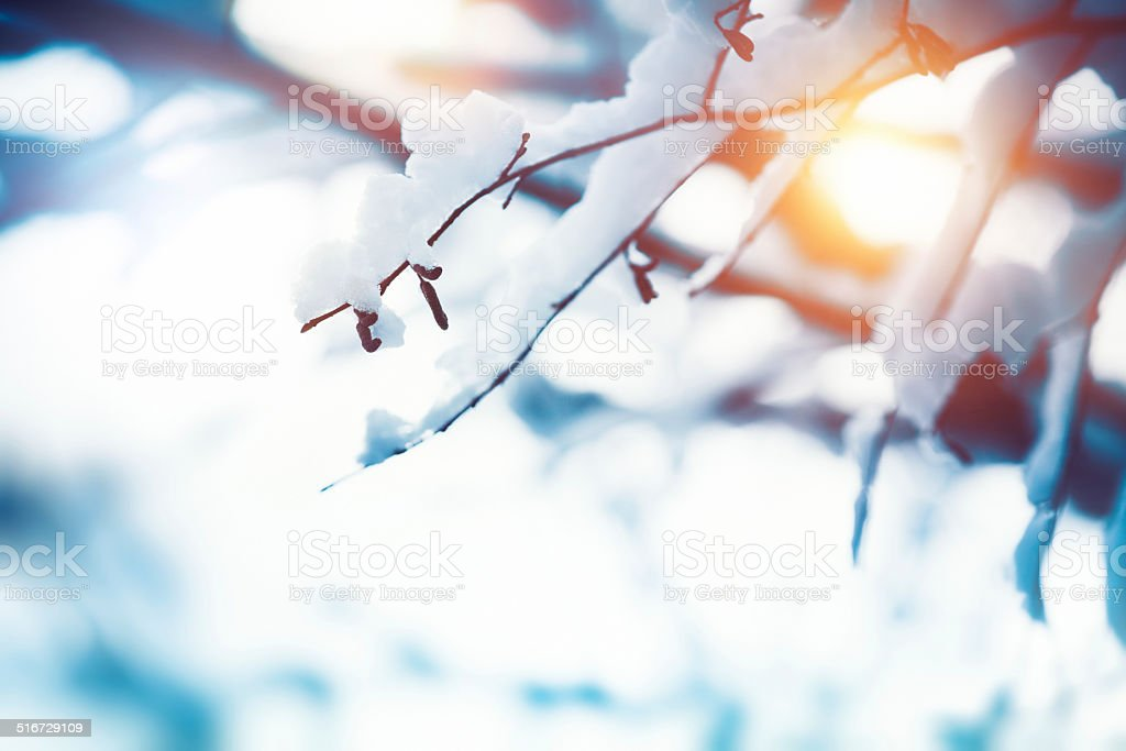 Winter Branch stock photo
