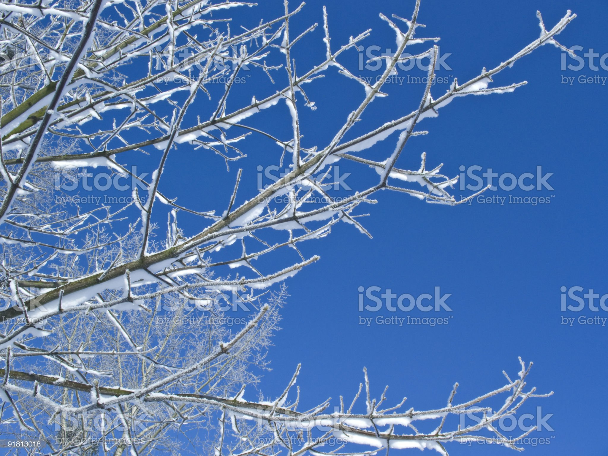 Winter branch with copyspace royalty-free stock photo