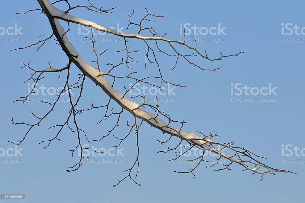 winter branch with snow royalty-free stock photo