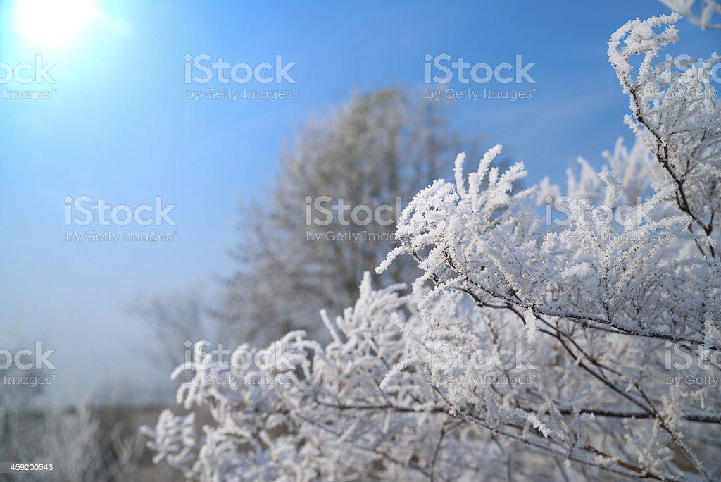 Winter branch XXXL royalty-free stock photo