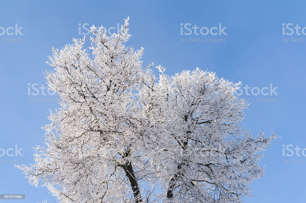 Winter. Branches of trees and shrubs in the snow stock photo