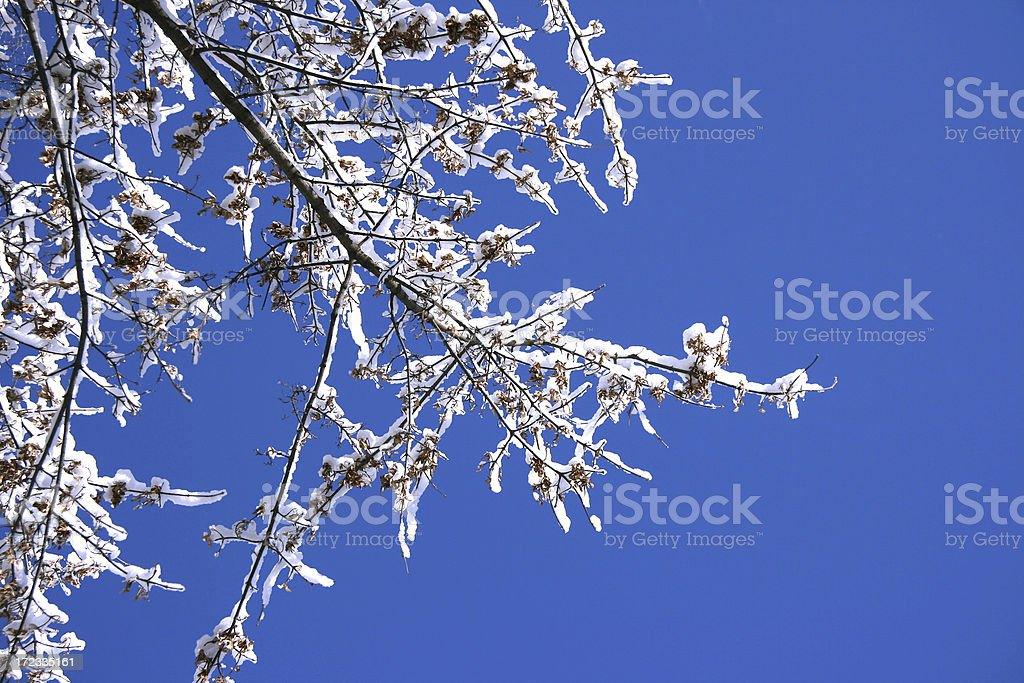 Winter branches royalty-free stock photo