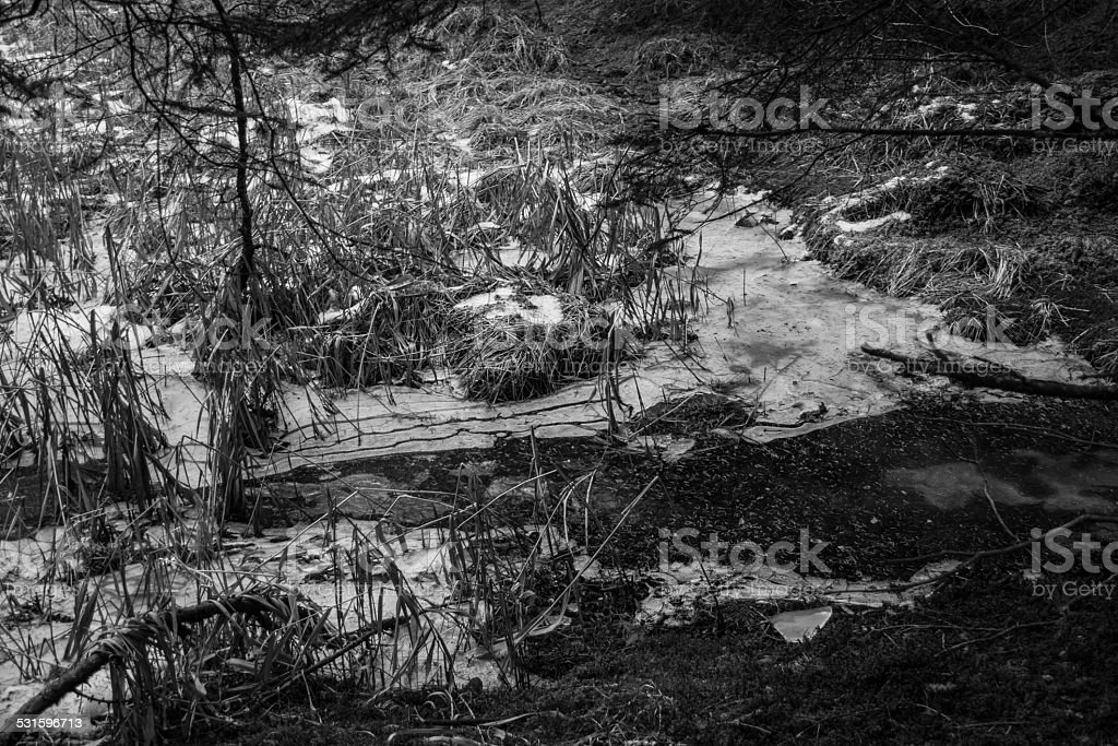 Winter cane thicket stock photo