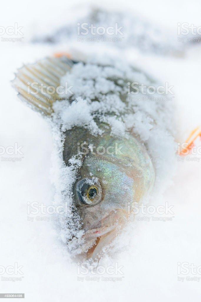 winter catch stock photo