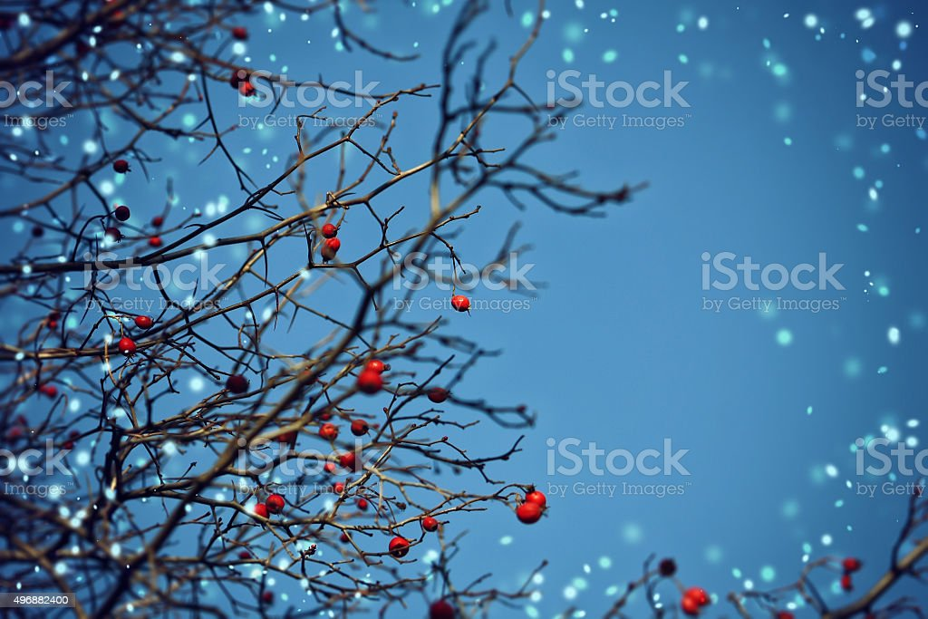 Winter Christmas background with hawthorn berries stock photo