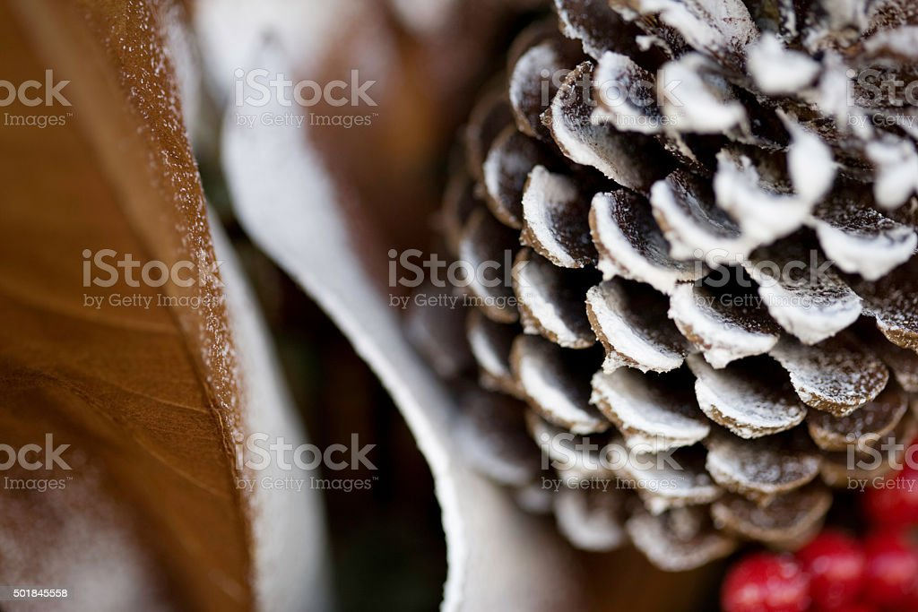Winter Christmas season snowy pine cone, berries, and leaves, stock photo