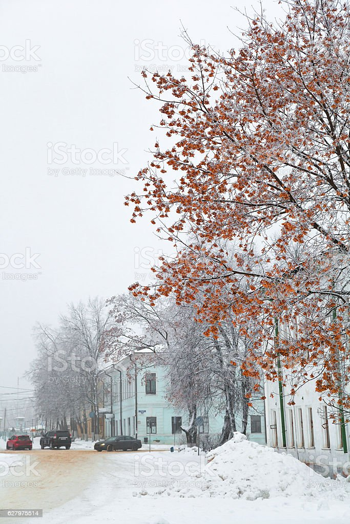 winter city landscape, beautiful maple in the foreground stock photo