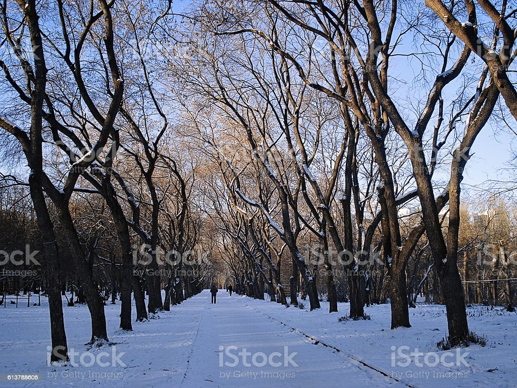 Winter cityscape. Avenue in the park. Yekaterinburg. December stock photo