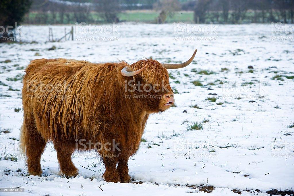 Winter Coat royalty-free stock photo
