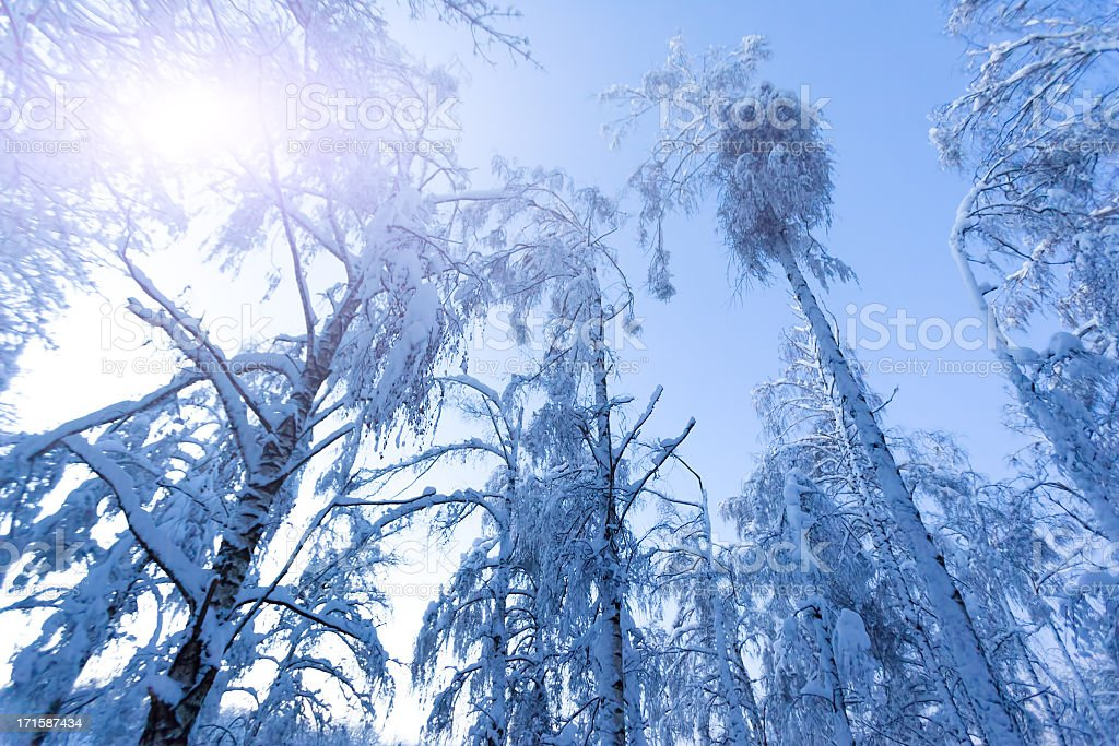 Winter cold day royalty-free stock photo