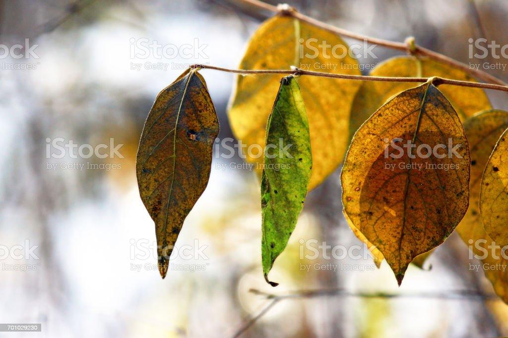 Winter color stock photo