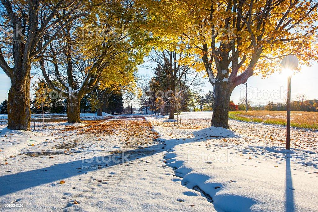 Winter colors stock photo
