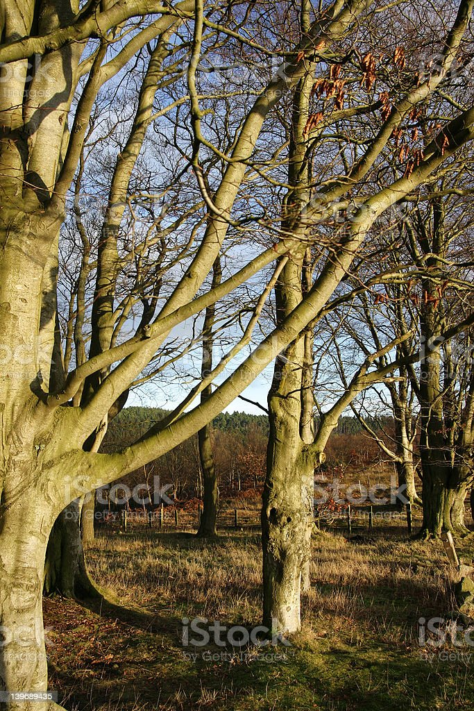 winter colours royalty-free stock photo