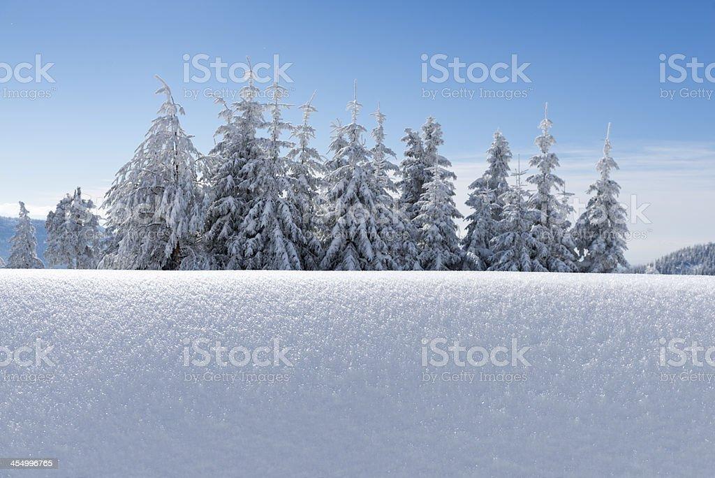 Winter, coniferous trees stock photo