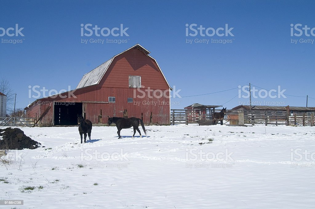 winter corral royalty-free stock photo