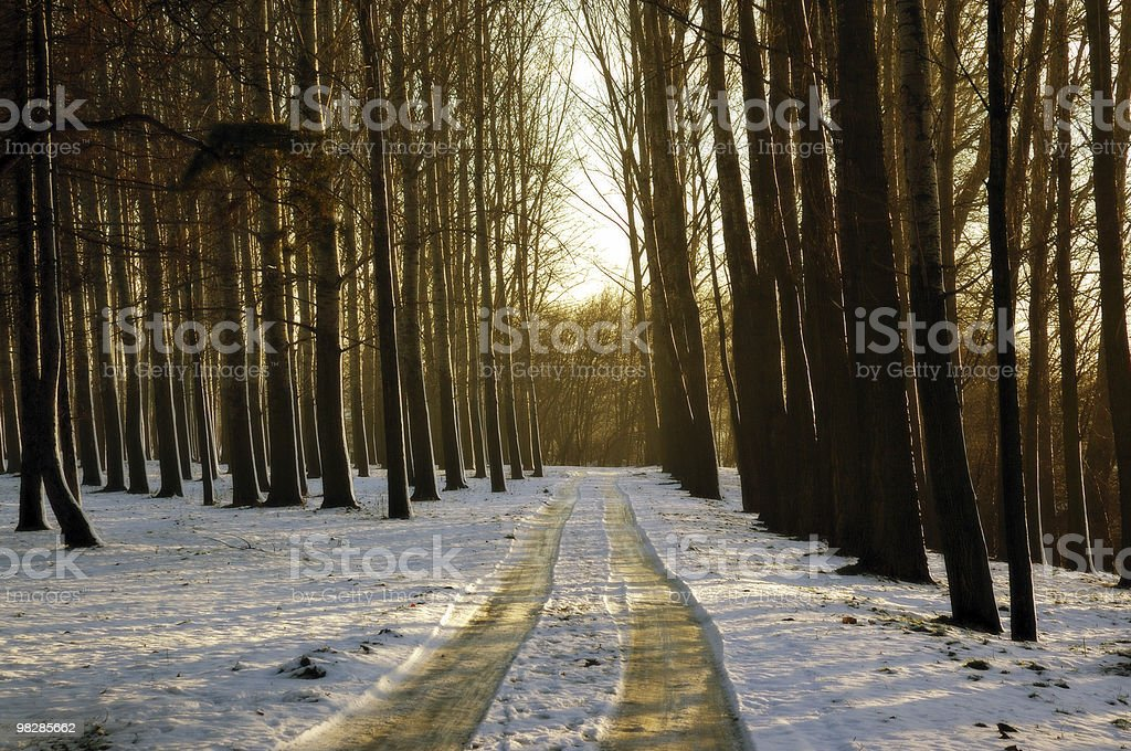 Winter country road. Snow landscape in the woods stock photo