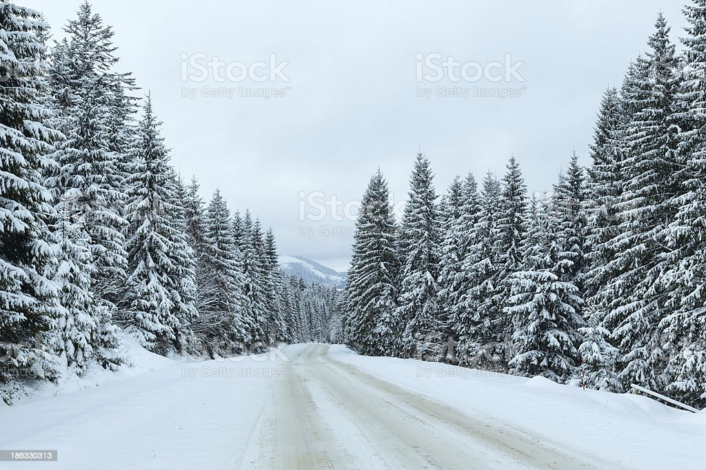 Winter country road with fir forest (overcast day). royalty-free stock photo