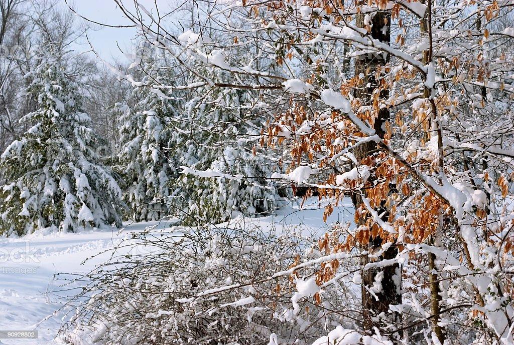 winter countryside stock photo