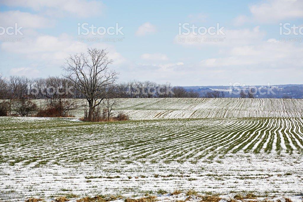 Winter Crop in Western New York State stock photo