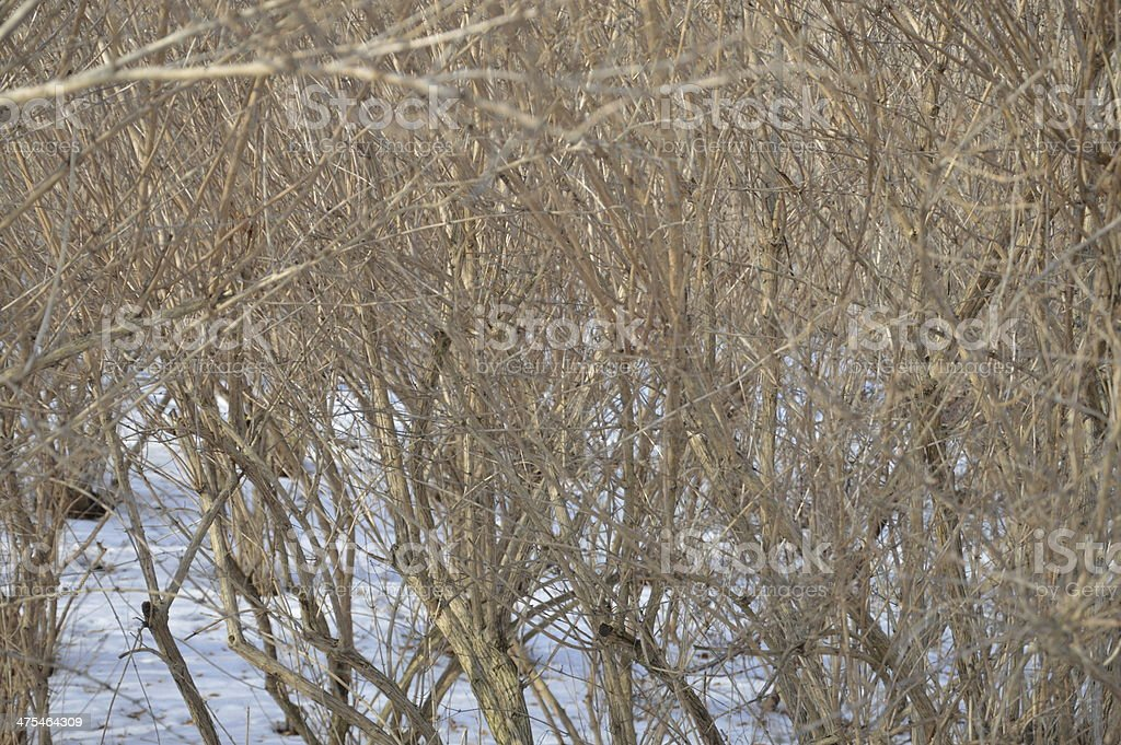 Winter day a Agrykola Park royalty-free stock photo