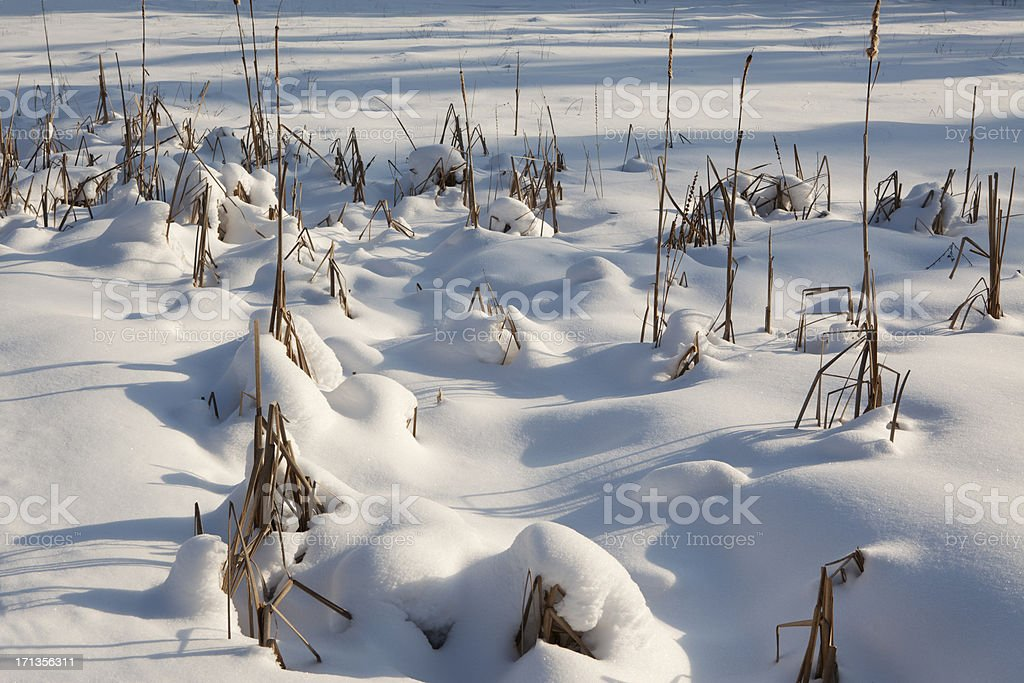 Winter day. royalty-free stock photo