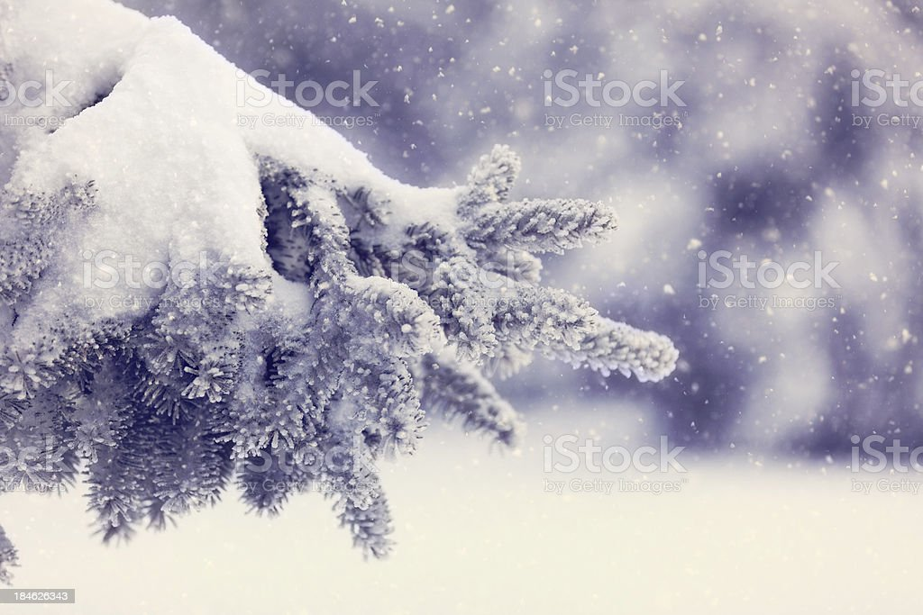 Winter Day royalty-free stock photo
