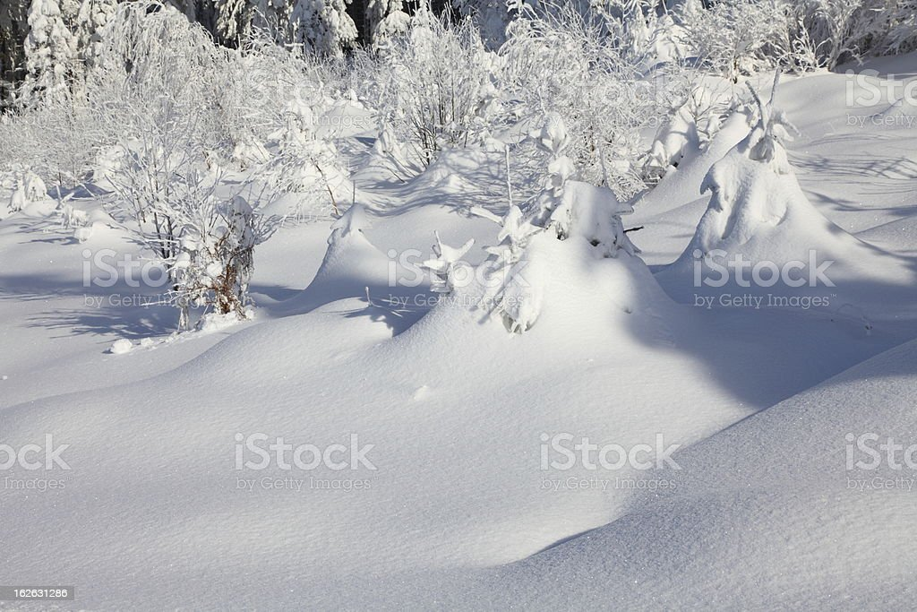winter day with white firs  for snowy background royalty-free stock photo