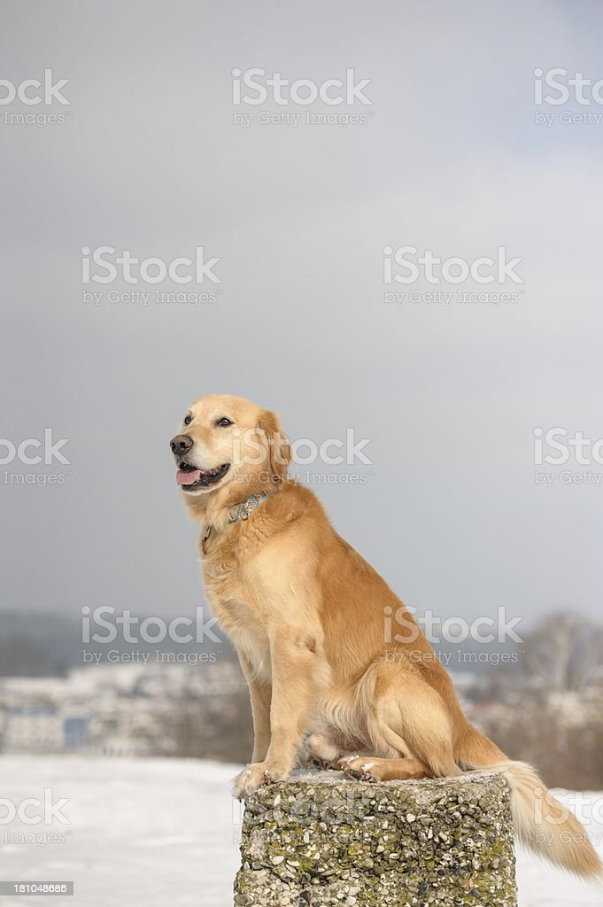 Winter dog royalty-free stock photo