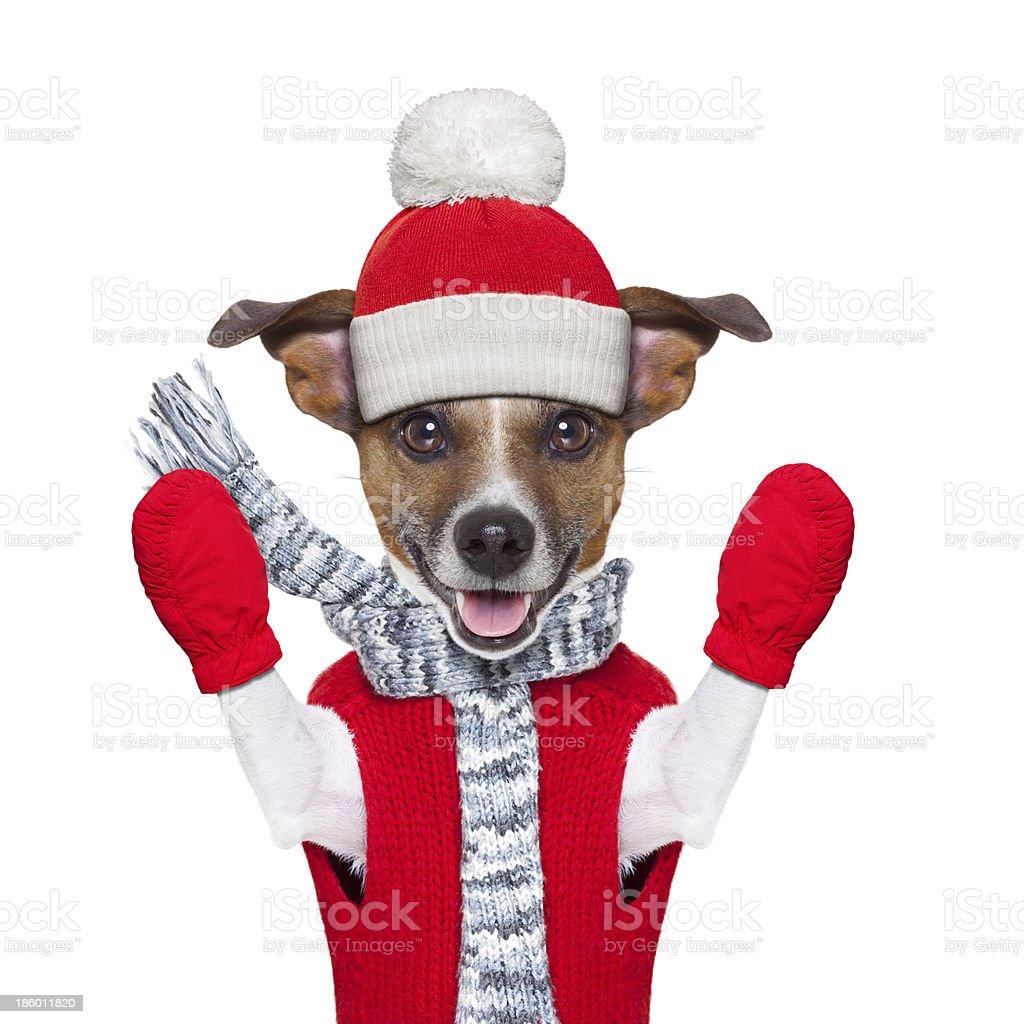 winter dog royalty-free stock photo