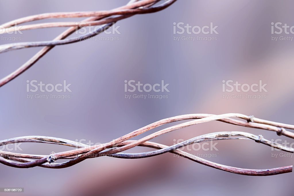 Winter dry plant background stock photo
