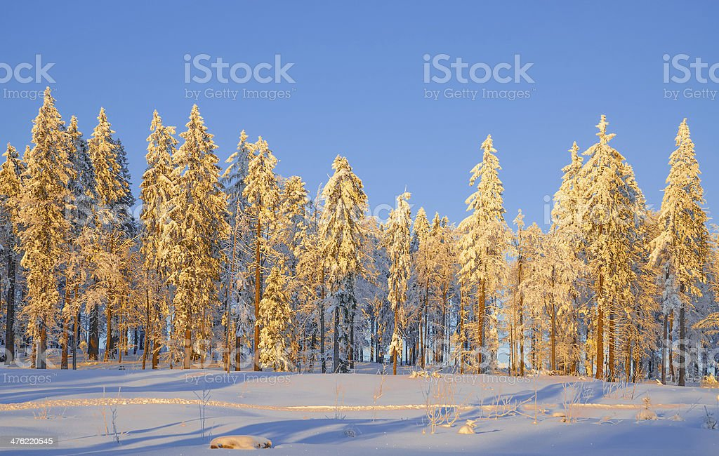 Winter Evening in Bavarian Forest,Germany stock photo