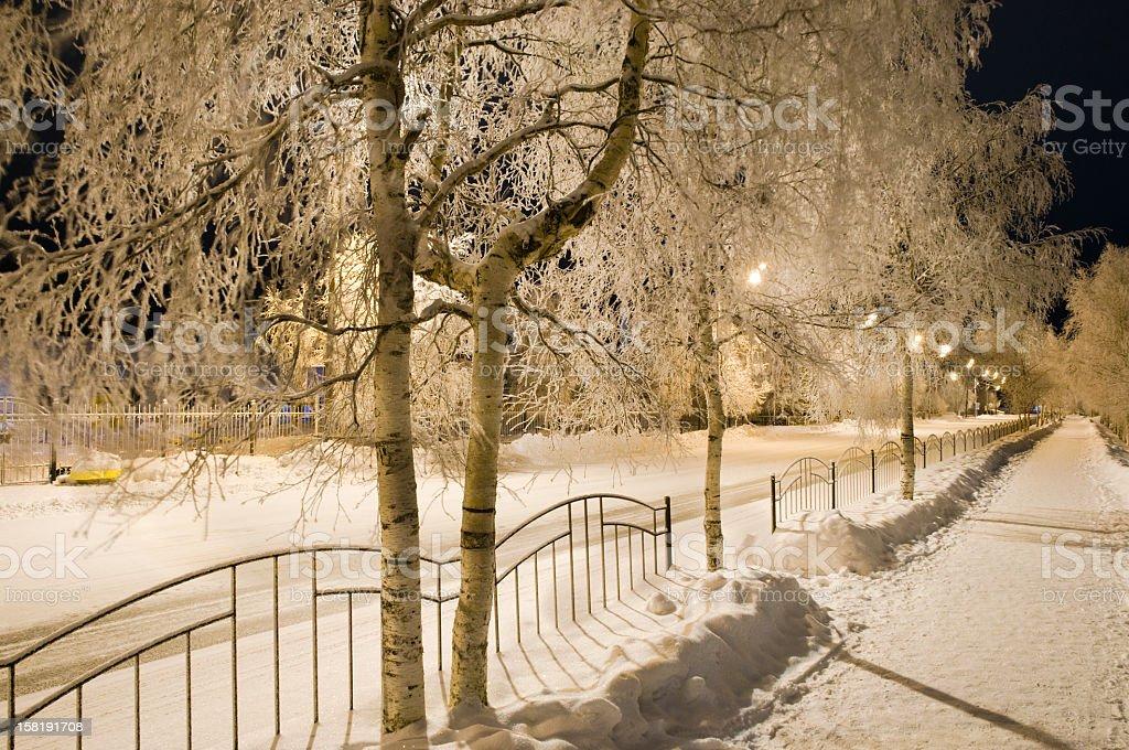 Winter evening. stock photo