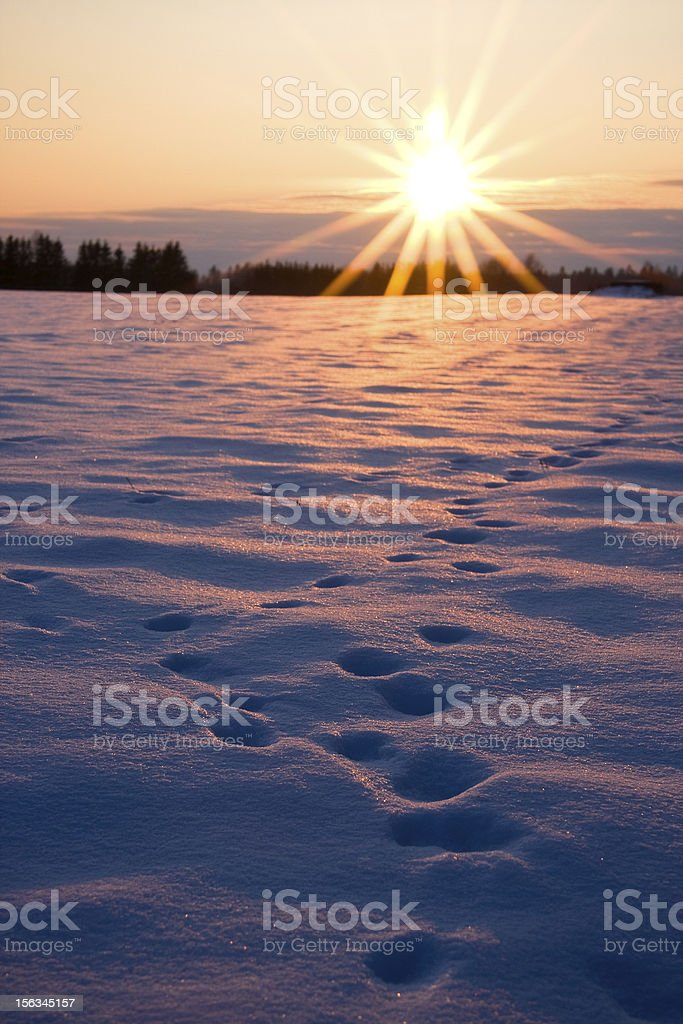 Winter evening sunset and foot prints in snow royalty-free stock photo