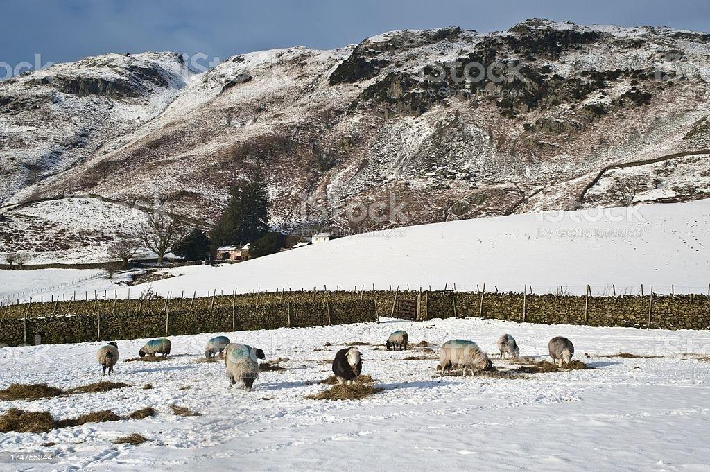 Winter Farming Scene stock photo