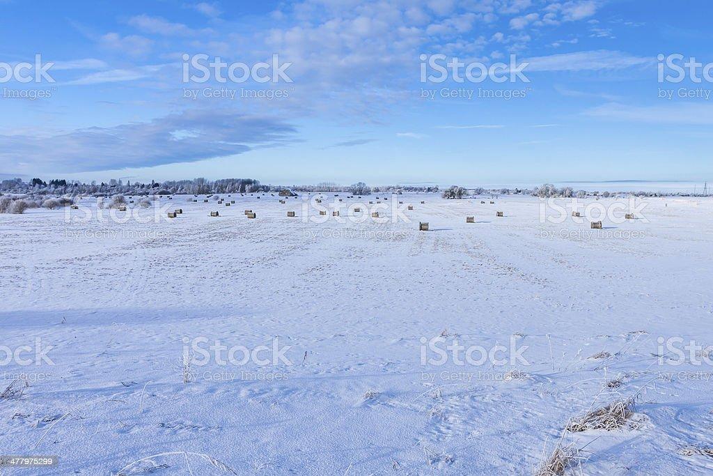 Winter farmland scenery royalty-free stock photo