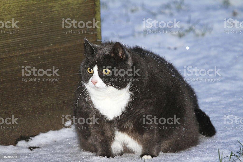 Winter fat isolation stock photo