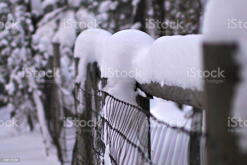 Winter Fence stock photo