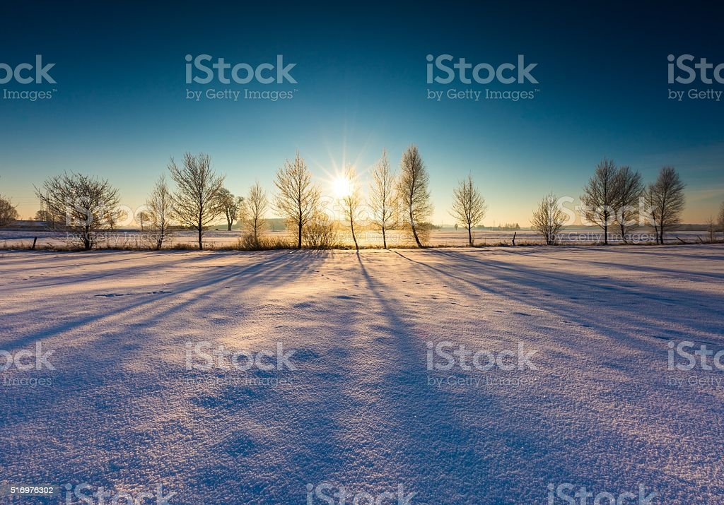 Winter field with withered trees stock photo