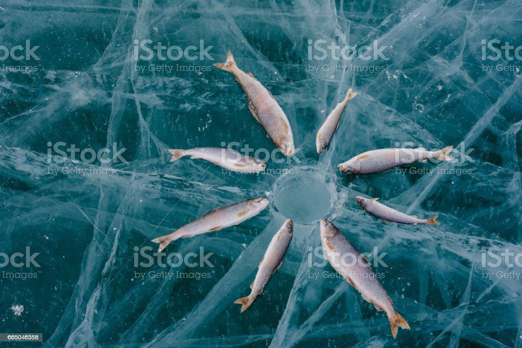 Winter fishing on the lake. stock photo