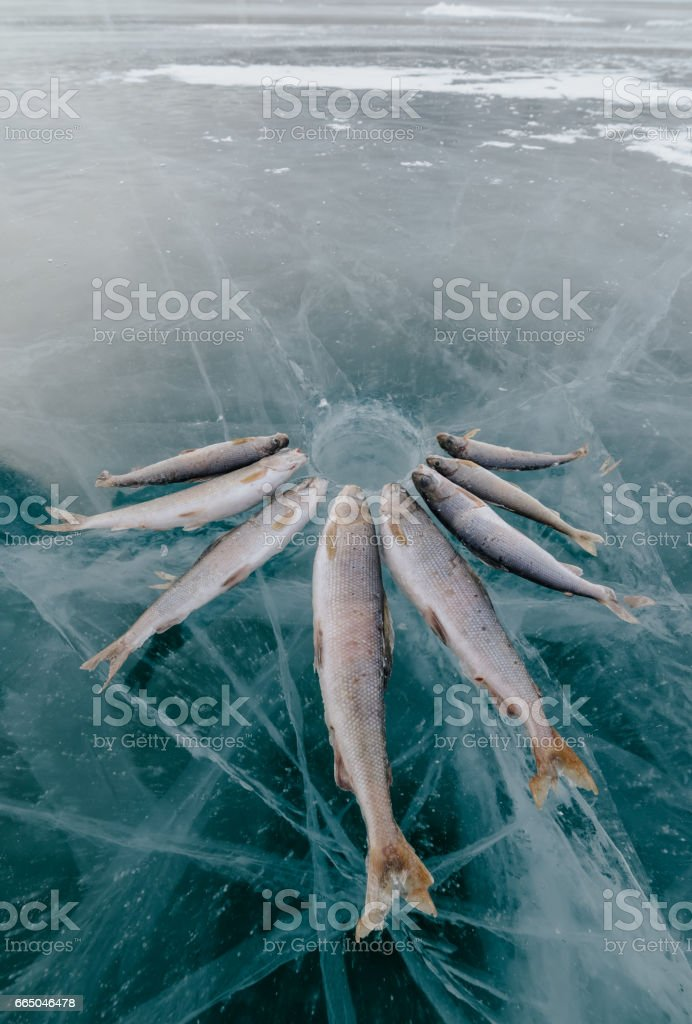 Winter fishing on the lake. stock photo