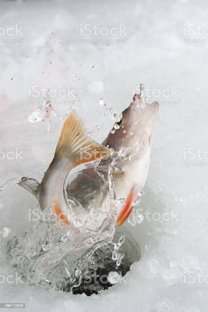 winter fishing royalty-free stock photo