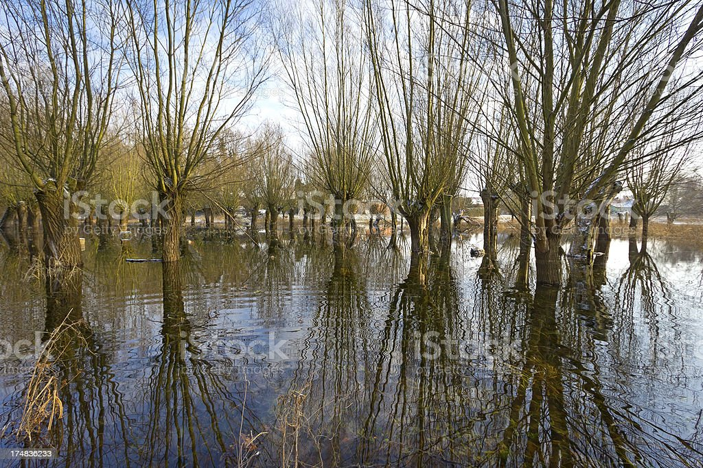 Winter flood at the Havel River stock photo