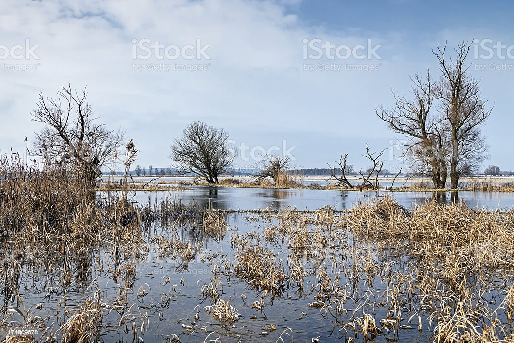Winter flood at the Havel River - Winterhochwasser royalty-free stock photo